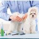 Benefits of Professional Pet Grooming