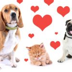 Pets and Valentine's Day