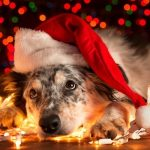 Keep Pets Safe During the Holiday Season