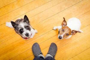 Pet Sitting vs. Pet Boarding