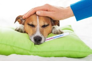 Pet Boarding vs. Pet Sitting: What Work for Your Pet?
