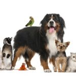 What to Consider When Choosing a Pet