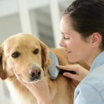 Pet Cancer and Symptoms