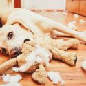 Understanding Some of the Most Common Dog Behaviors