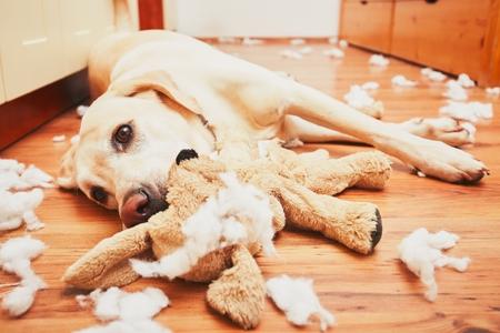 Common Dog Behaviors