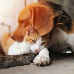 Dog cuddling with cat