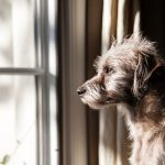 How to Cure Your Dog's Separation Anxiety
