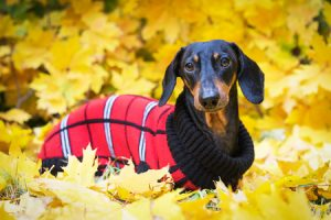 Fall Summer Pet Care Tips