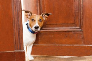 How to Prepare for Your Pet Sitter