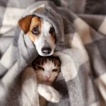 How to Help Your Dog and Cat Be Friends