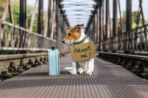 Why Adopt a Rescue Pet?