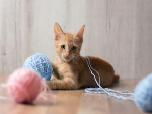 Fun Activities to Keep Your Your Cat Occupied