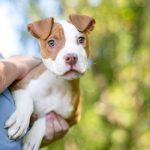 Benefits of Fostering A Dog