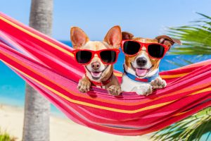 Summer Pet Care Tips