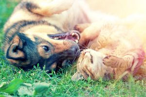 How to Help Your Dog and Cat to Get Along