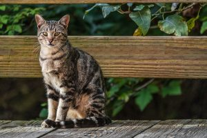 The Ultimate Guide to Cat Enclosures