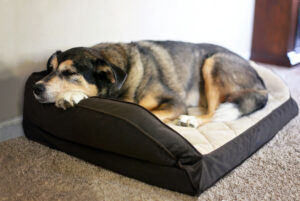 What is a Calming Dog Bed?
