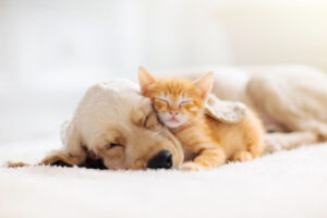 Dog or Cat: Which Should You Adopt?